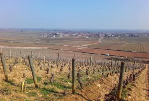 Udsigten fra toppen af Chevalier-Montrachet. Marken, hvor den hvide bil holder er Le Montrachet.